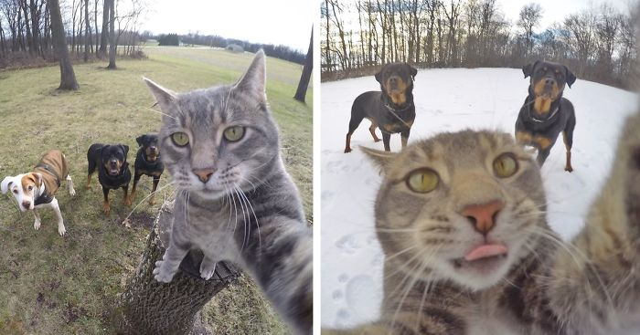 dogs taking selfies