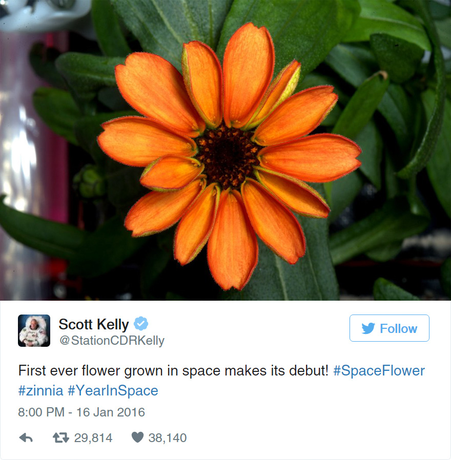 space-first-flower-bloom-nasa-scott-kelly-7