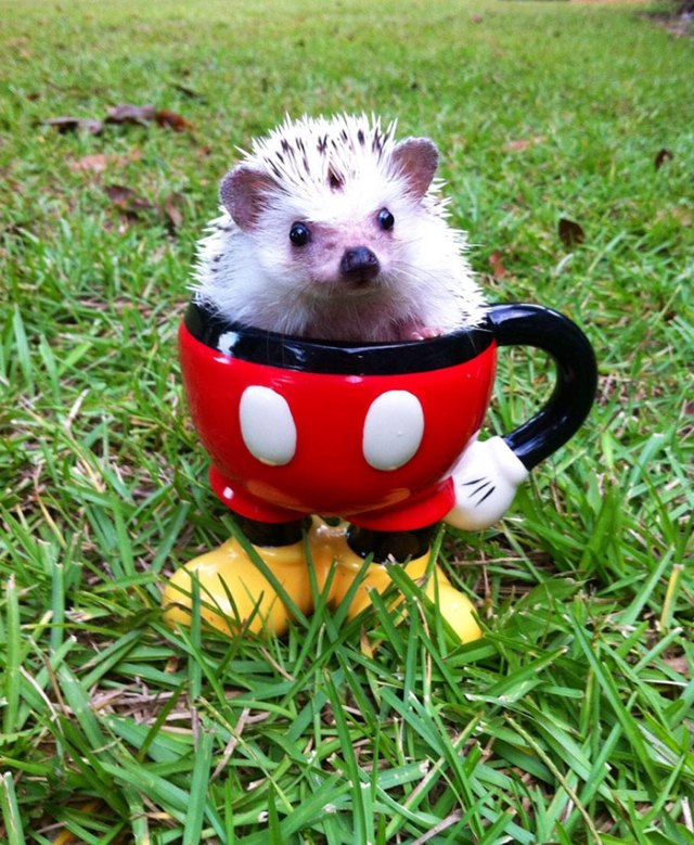 My Best Friend Just Sent Me This Picture Of Her Hedgehog