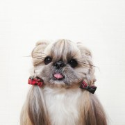 day dog hairstyle