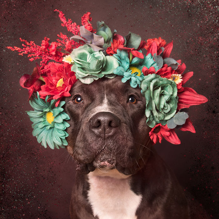 Cute Pretty Flower Calendar Wallpaper Pit Bull Flower Power Already Found Homes For 140 Pits