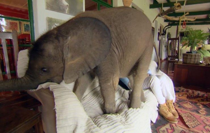 rescue-baby-elephant-moyo-roxy-danckwerts-wild-is-life-zimbabwe-15