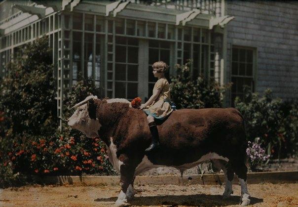 Un niño sentado en A Hereford Bull Cerca de Pleasanton, California, 1926