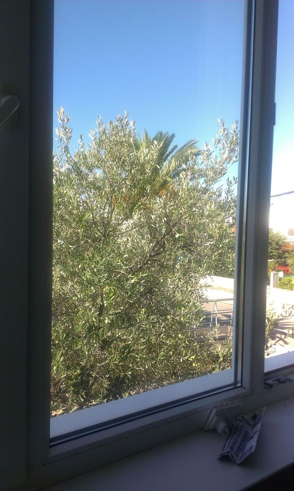 Esperamos que la calidad no es demasiado baja .. Hay árboles preciosos :)