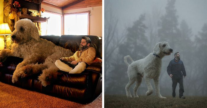 Photographer Photoshops His Dog Into A Giant  Bored Panda