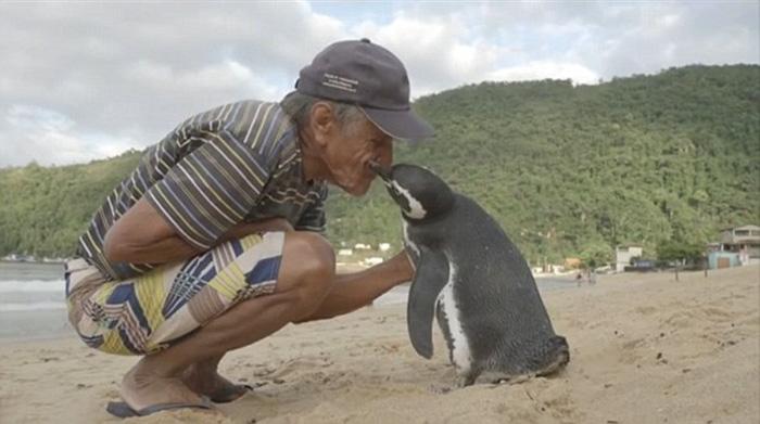 uomo-salva-pinguino-torna-nuota-5000-miglia-18