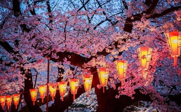 primavera, Japón y la cereza-flores-national-geographics-21