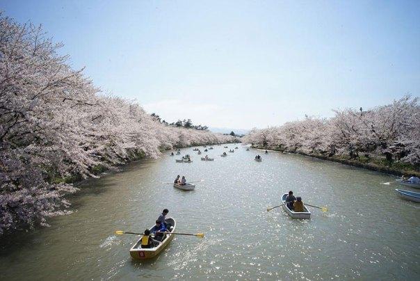 primavera, Japón y la cereza-flores-national-geographics-23