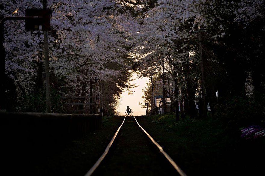 spring-japan-cherry-blossoms-national-geographics-5