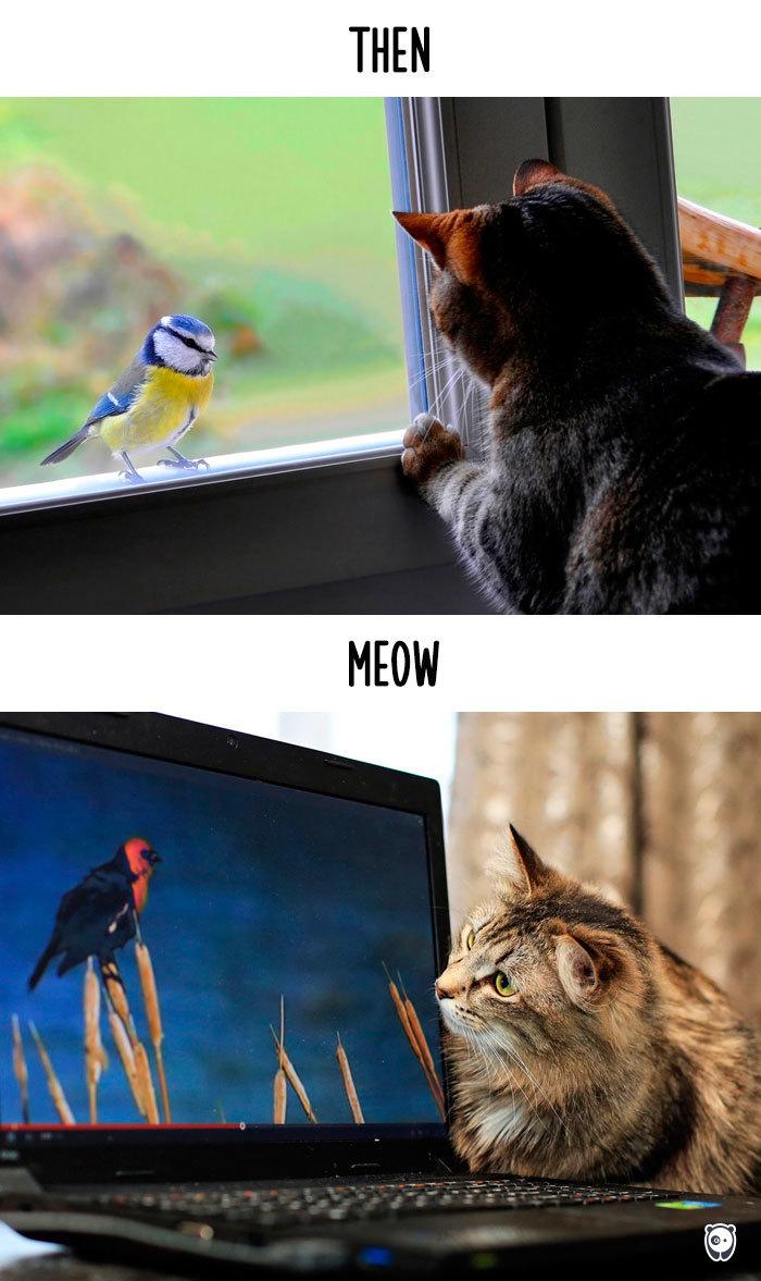 Osservazione degli uccelli