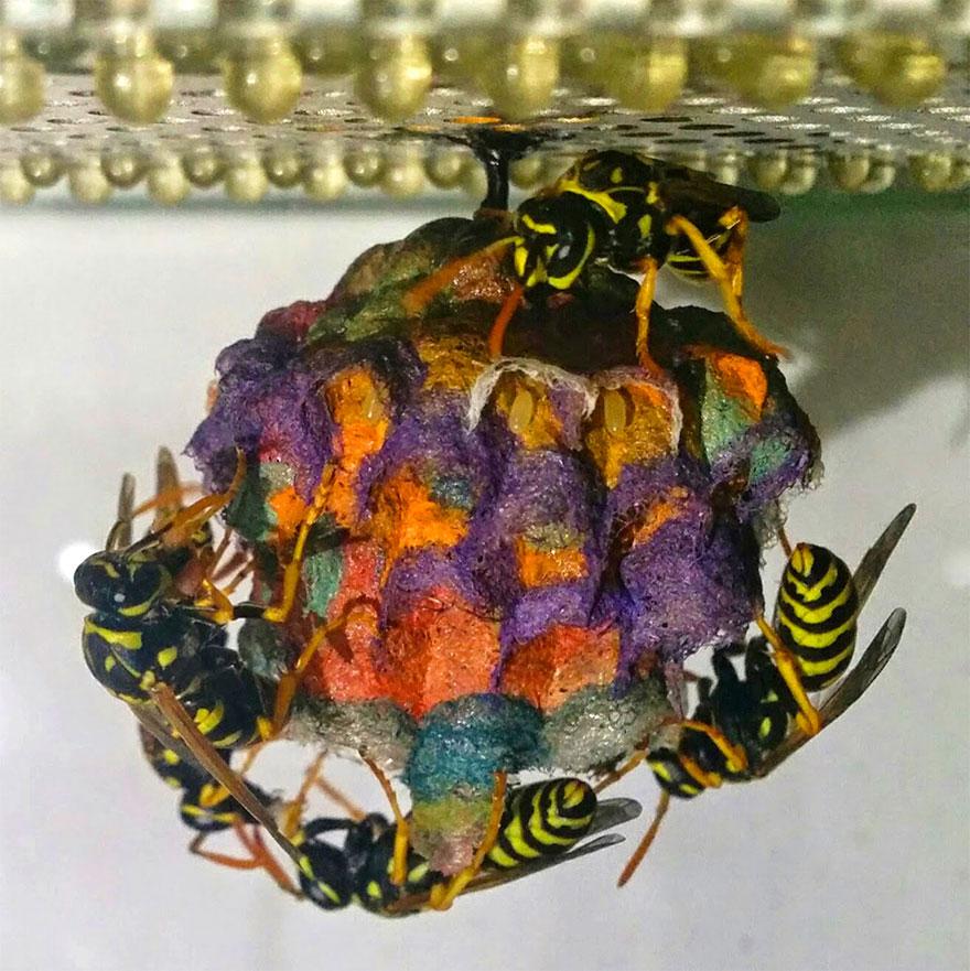 Vespas criam colmeias com papéis coloridos