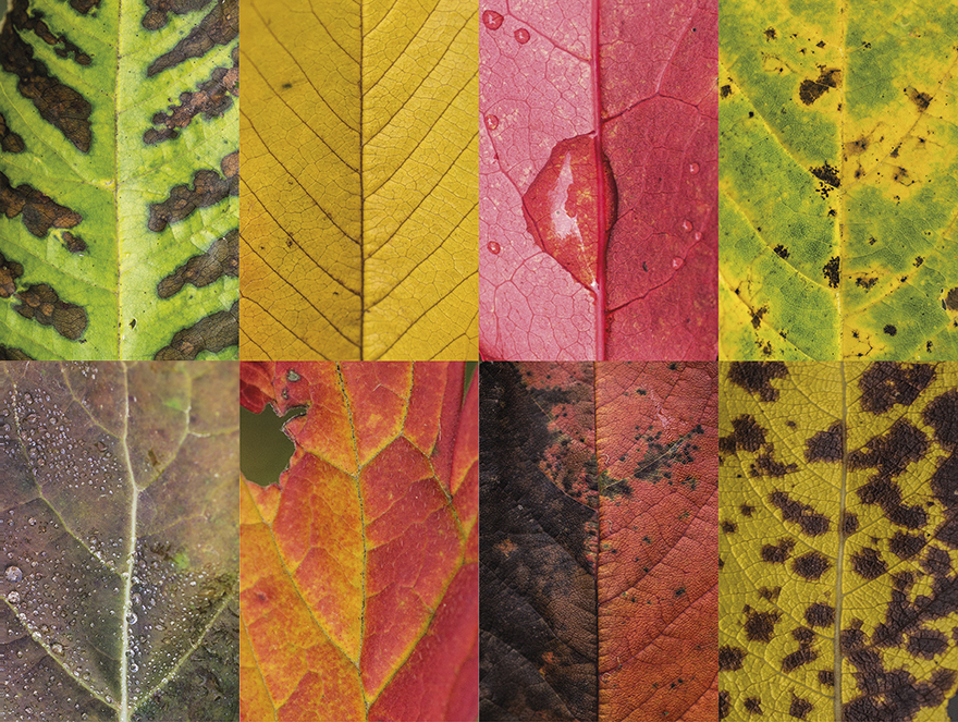 Fall Leaves Falling Wallpaper I Photographed Hundreds Of Leaves To Show The Beauty Of