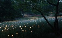 Field Of Light: Artist Uses 50,000 Lights To Turn Desert ...
