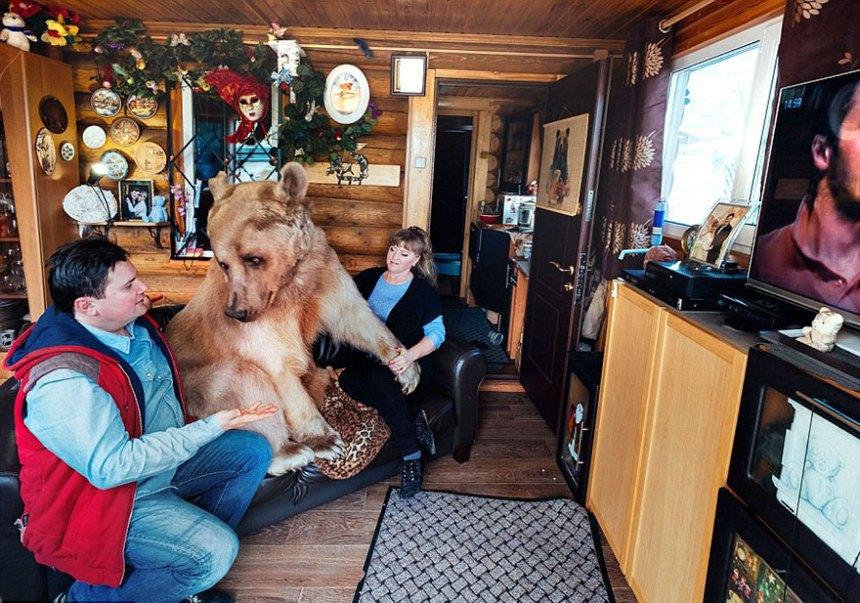 adottato-bear-russo-famiglia-Stepan-A1