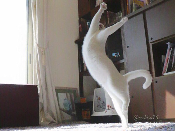 ballet cat japan 13 - Cat Is Home Alone. Guess What? It's Dance Time!