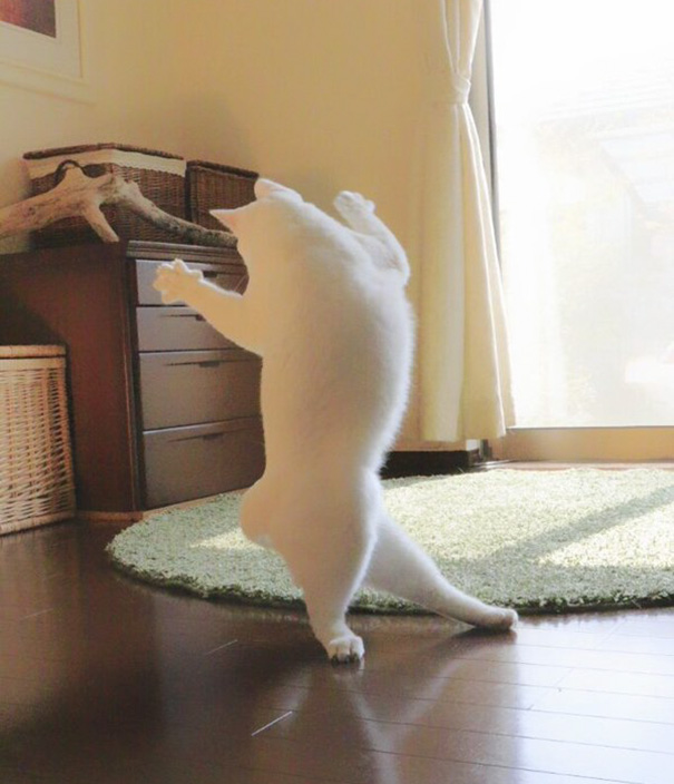 ballet cat japan 7 - Cat Is Home Alone. Guess What? It's Dance Time!