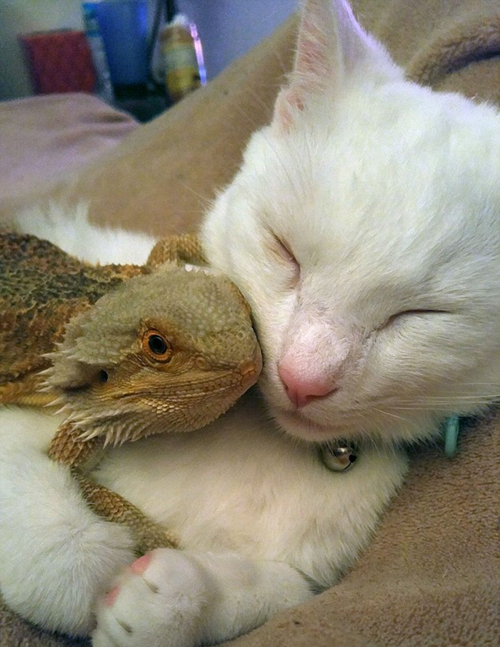 Dragon And Cat Become Two Unlikely Best Friends Bored Panda