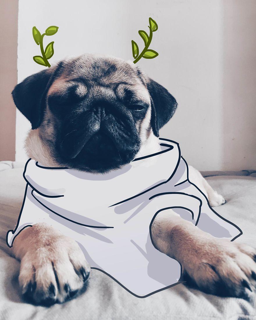Pug Caesar