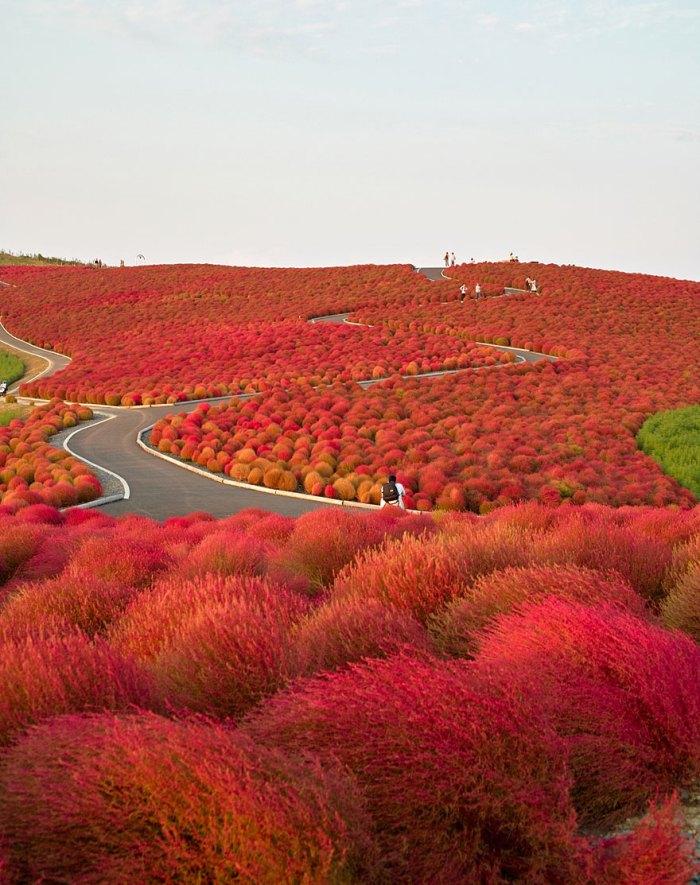 Autumn In Hitachi Seaside Park