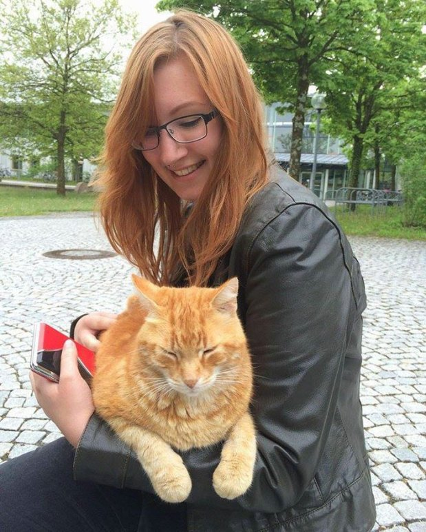 campus-cat-university-cuddles-augsburg-germany-5