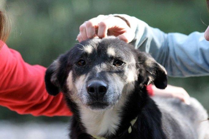 stray-dog-transform-stone-mange-petra-greece-18