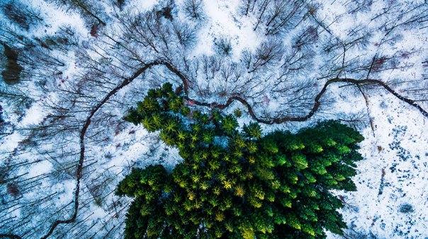 1er premio Ganador - Categoría fauna de la naturaleza: Kalbyris Bosque Dinamarca