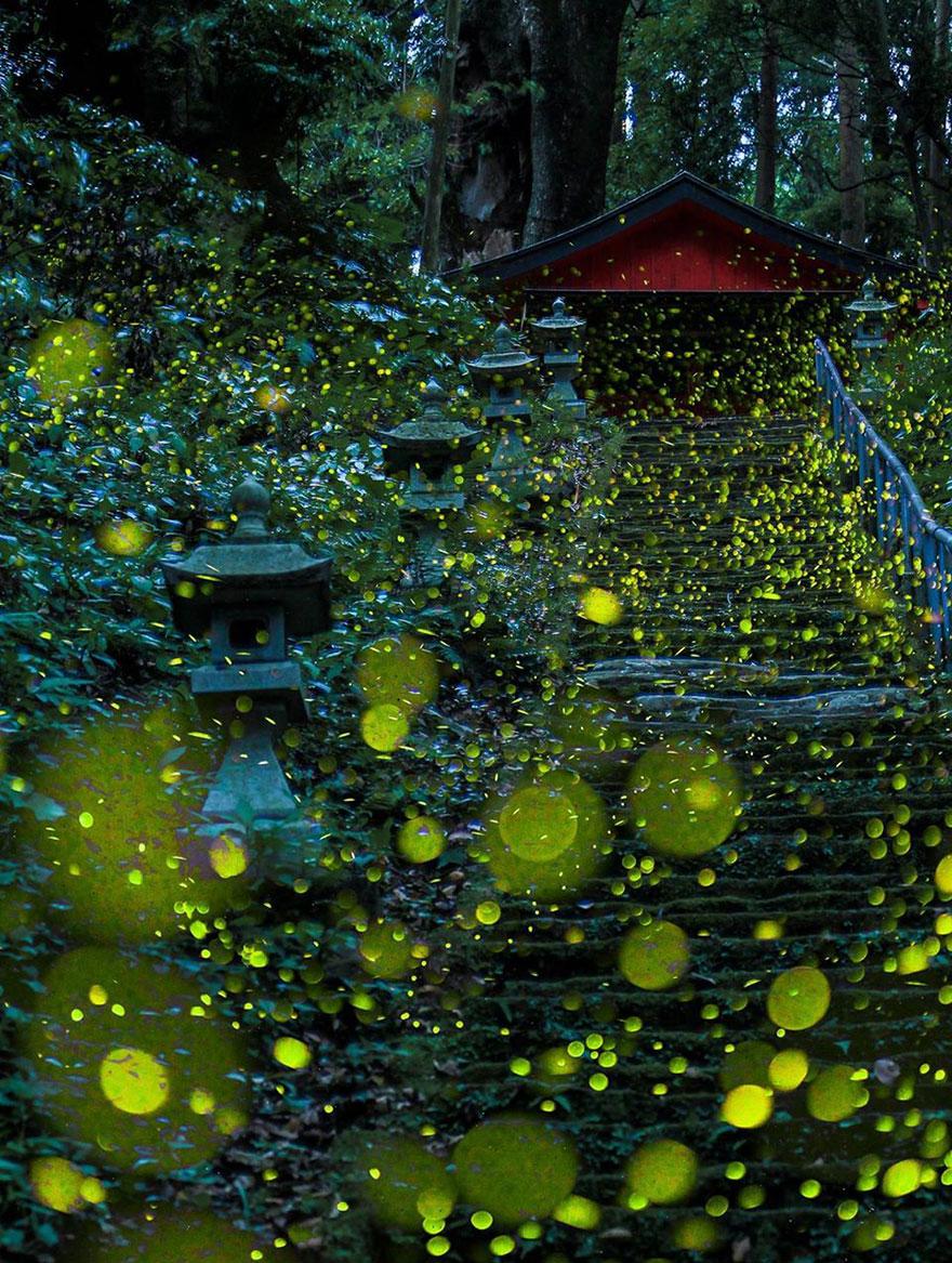 fireflies-long-exposure-photography-2016-japan-4a