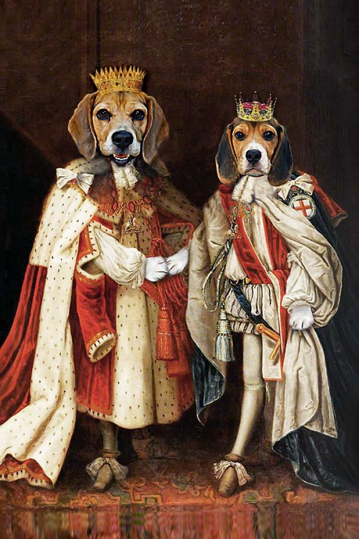 King James  King Charles  the Regal Beagle Brothers  Bored Panda