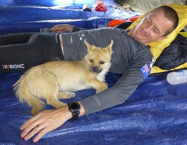 stray-dog-joins-race-gobi-dion-leonard-china-4