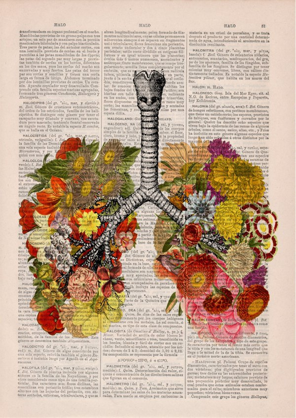 Floral Anatomical Illustrations Breathe Life Discarded Books Bored Panda
