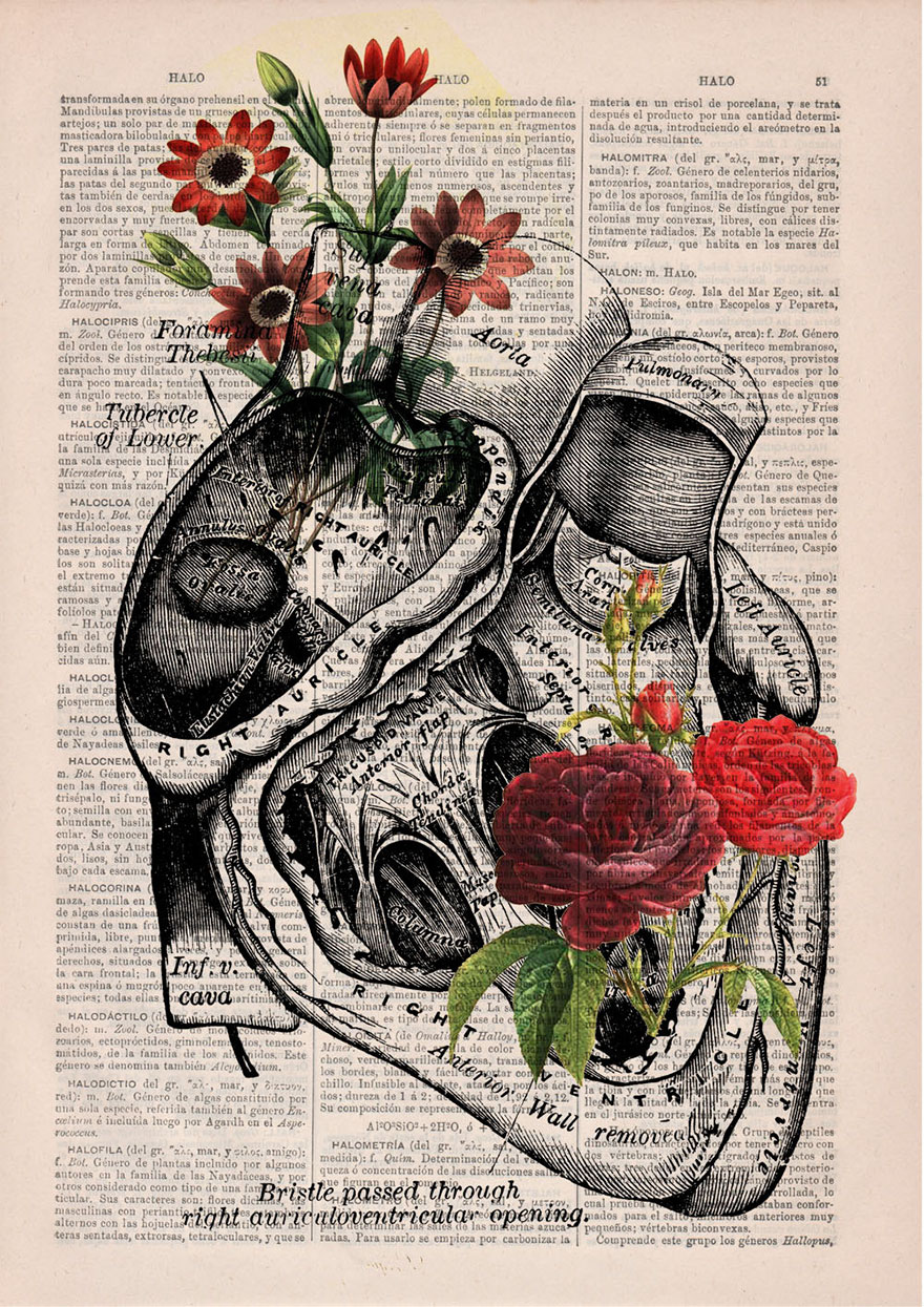 Heart Diagram Heart And Old Love On Pinterest