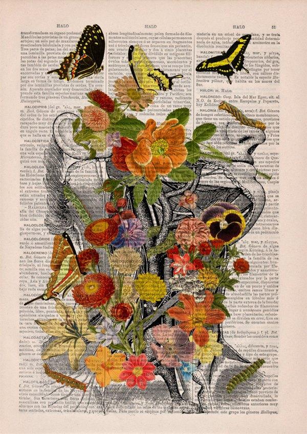 Floral Anatomical Illustrations Breathe Life