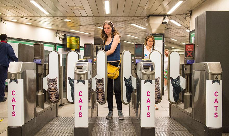 cat-ads-underground-subway-metro-london-10