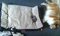 10+ Asshole Cats Who Stole Dog Beds And Didnt Give A Damn ...