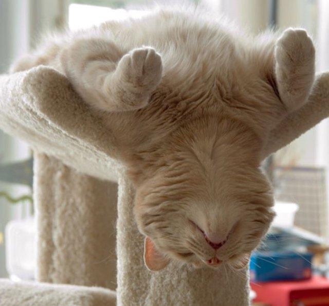 gato do sono