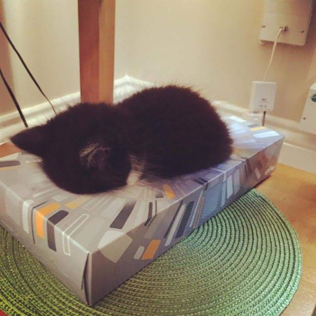Omar Asleep In A Box Tissue