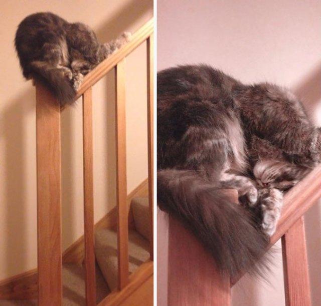 De todos os lugares Um gato pode optar por dormir um pouco