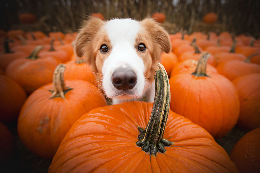 Pumpkins Fall Wallpaper My Dogs And I Found A Place Full Of Pumpkins And Decided