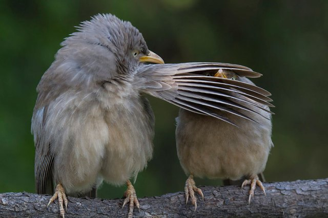 Comedy Wildlife Photo Awards Shortlist