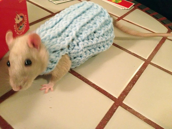 My new sweater just in time for winter