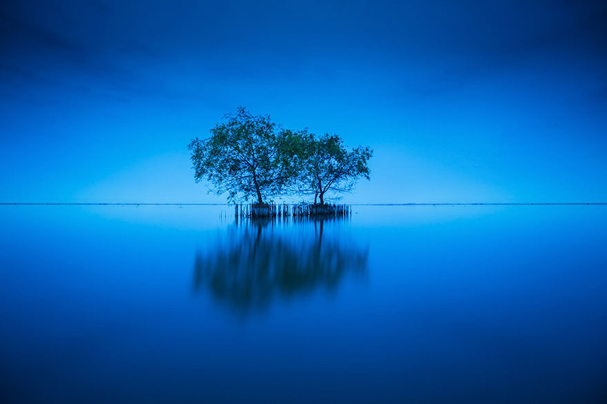 Интелигентно дрвеће