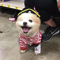 20+ Terrifyingly Pawsome Halloween Costumes For Dogs ...