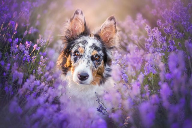 Simple portrait in lavender!