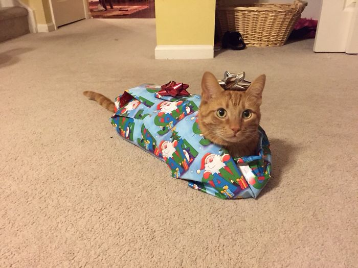 Here's Twix. He Puts Up With A Lot From The Kids. Merry Christmas!
