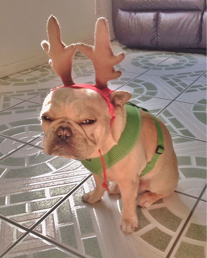 Not Everyone Is As Excited About Christmas
