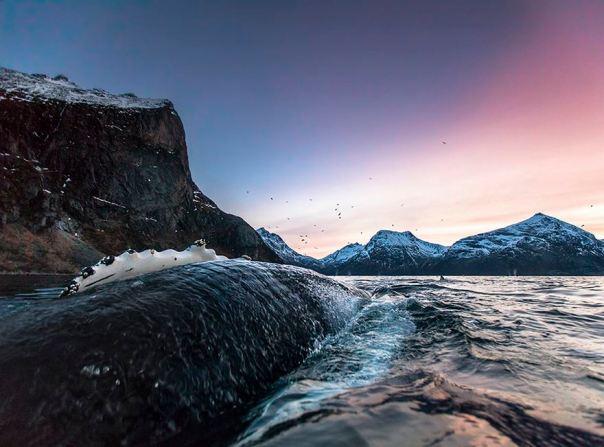 Las ballenas del Ártico