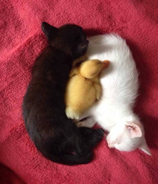 72 yin and yang