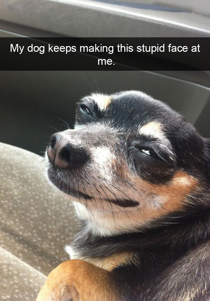 Funny Dog Faces Quotes