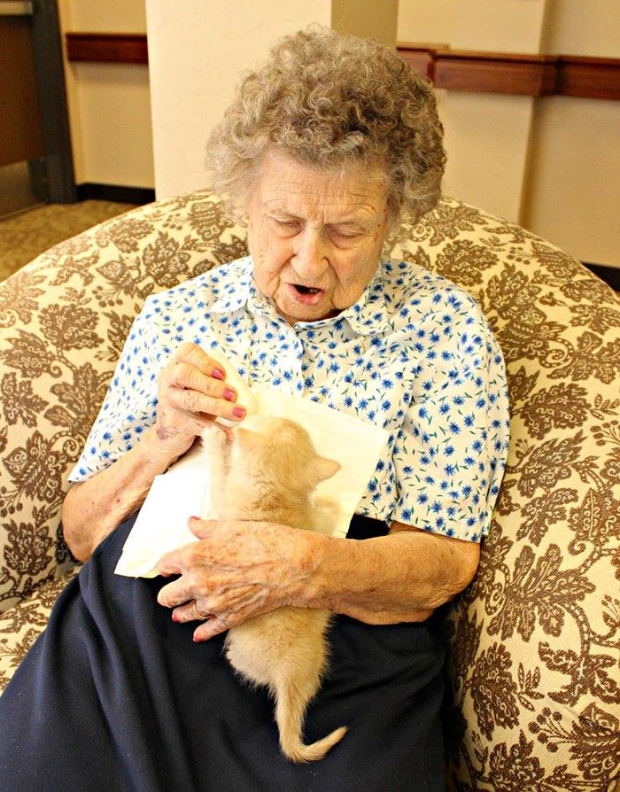 retirement-home-shelter-cats-1