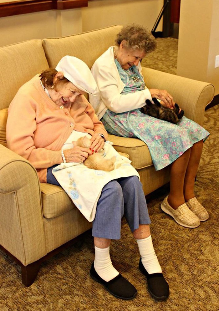 retirement-home-shelter-cats-7